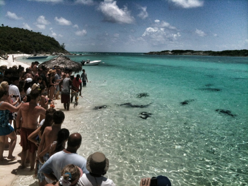 Meeting the reef sharks