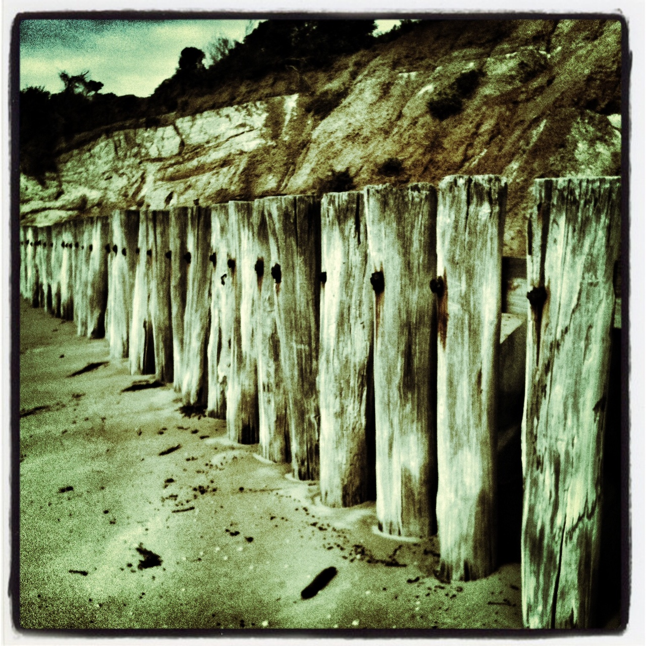 My photo of beach fence posts